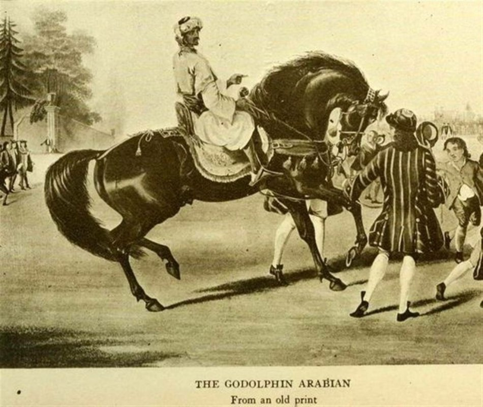 Годольфин Арабиан (Шам)
