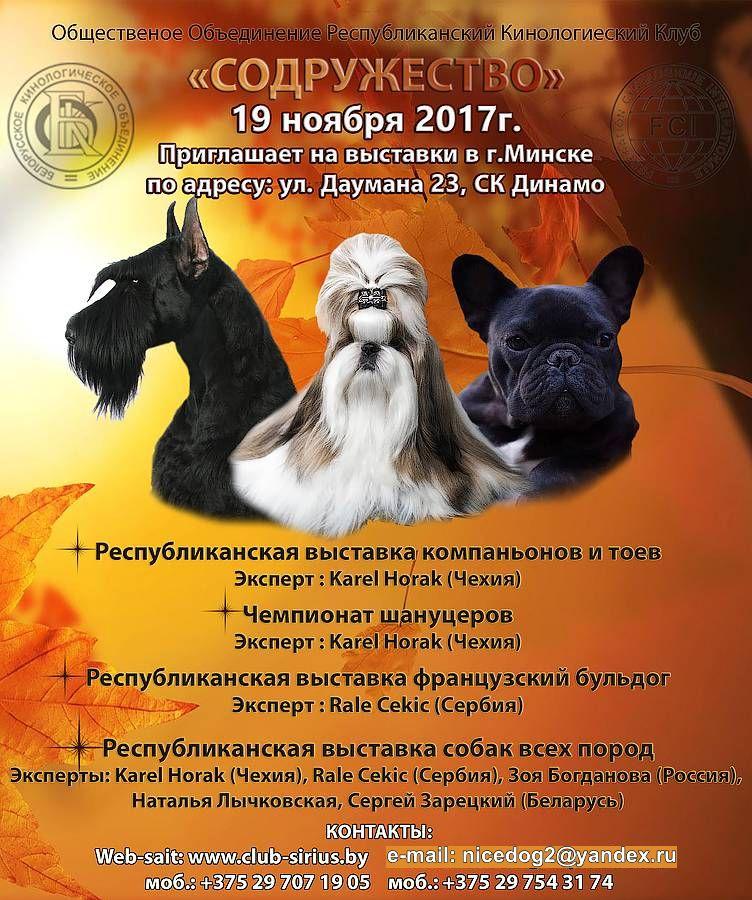 Выставки собак (клуб «Сириус»)