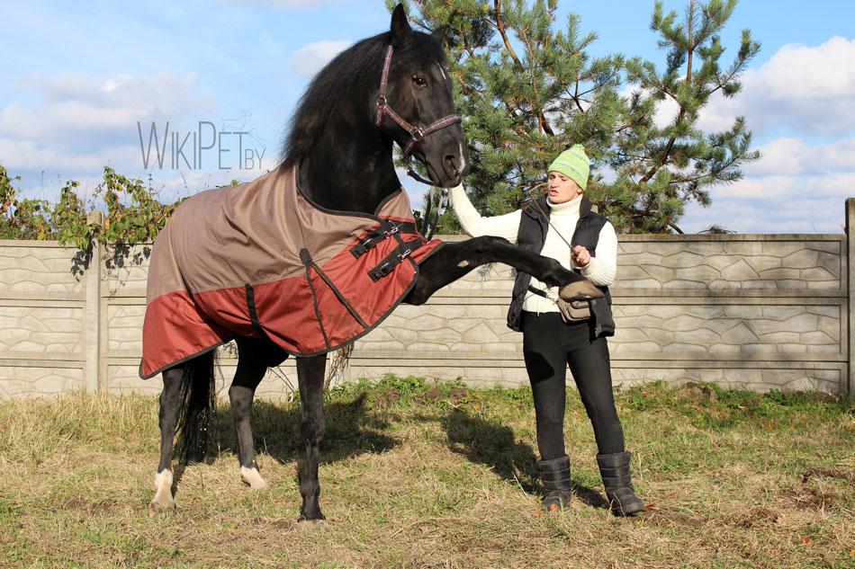 Дрессированная лошадь