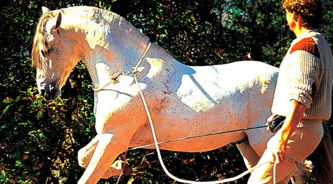 Карл Фердинанд Хемпфлинг обучает лошадь сбору