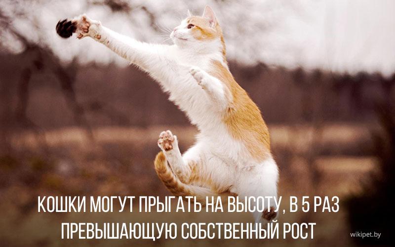 рыжая кошка прыгает за шишкой