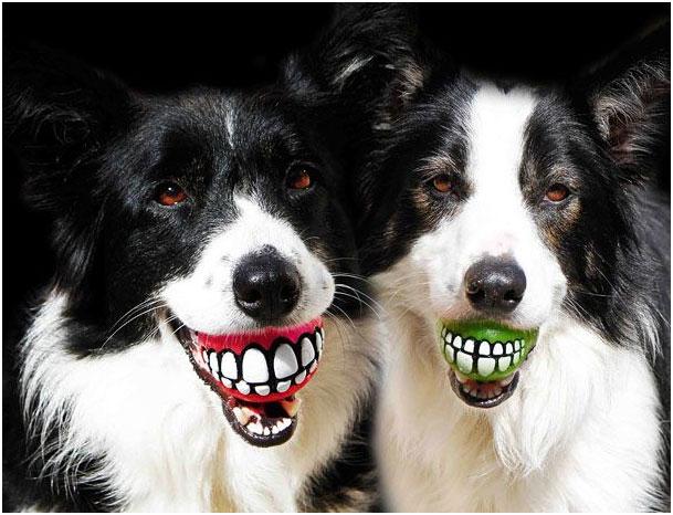 собаки-улыбаки с мячиками в зубах