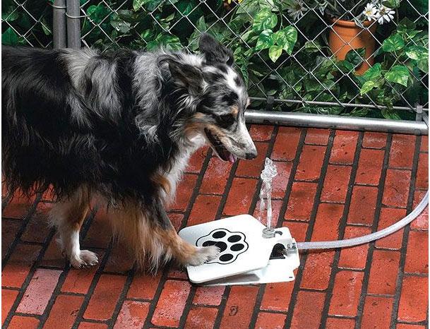 собака пьет из фонтанчика