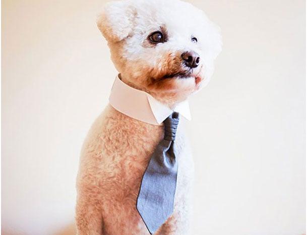 собака в галстуке