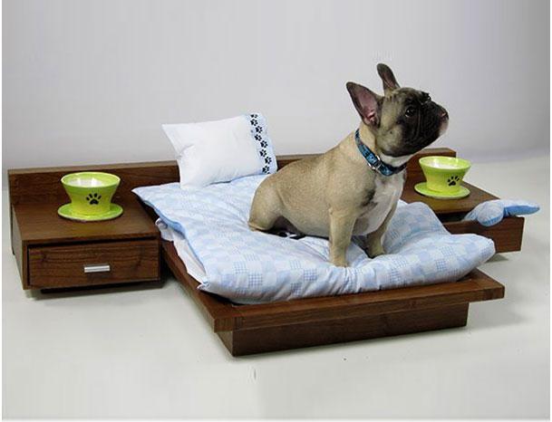 собака сидит на постели