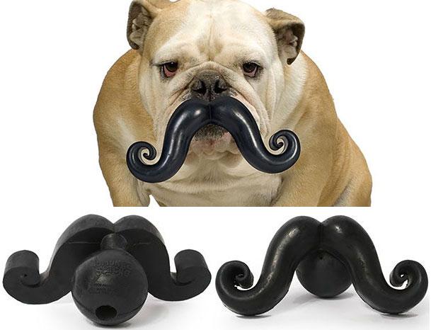 собака с игрушечными усами