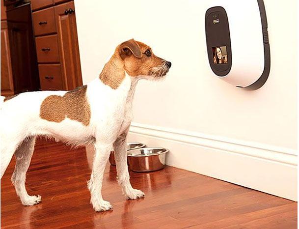 собака принимает видеозвонок