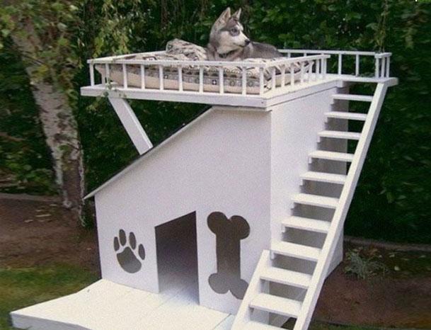 двухэтажный дом для собак