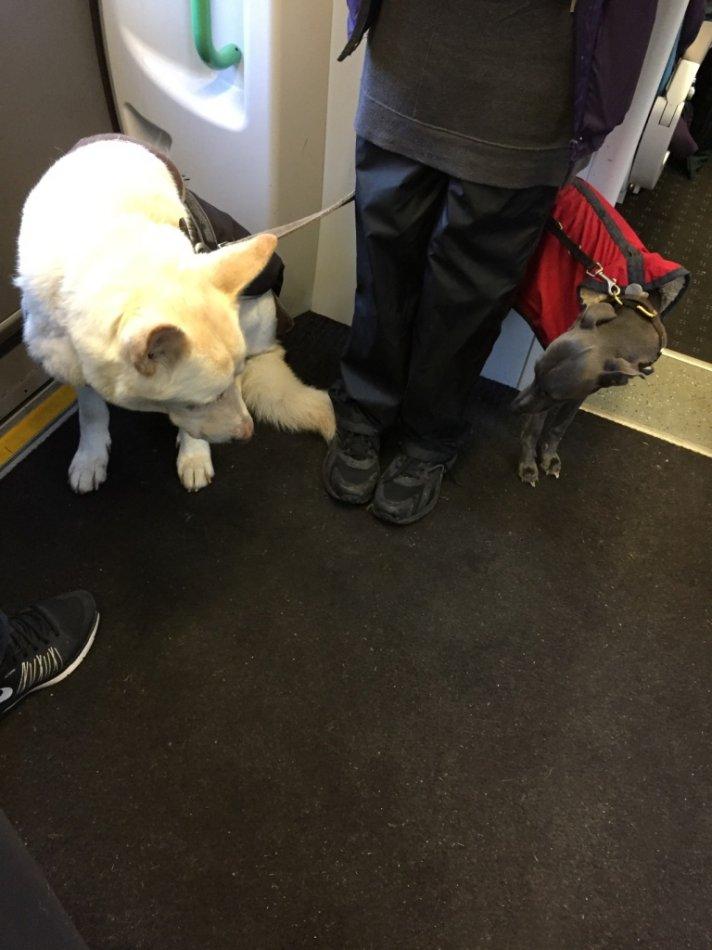 Собаки в Лондоне