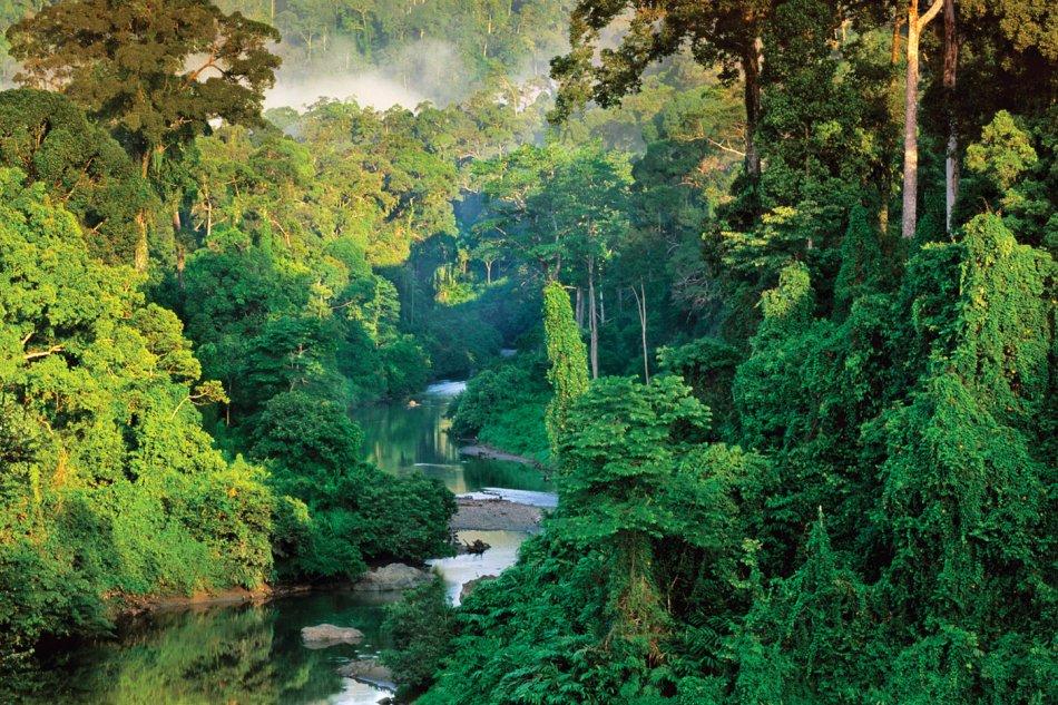 тропическией лес