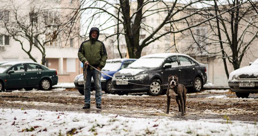 человек на прогулке с собакой