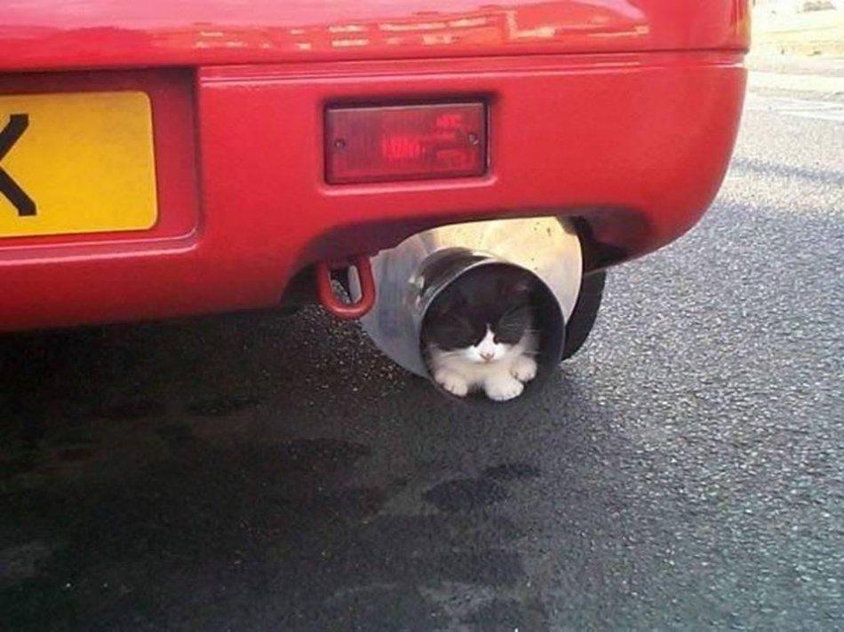 Кошки гибнут в машинах