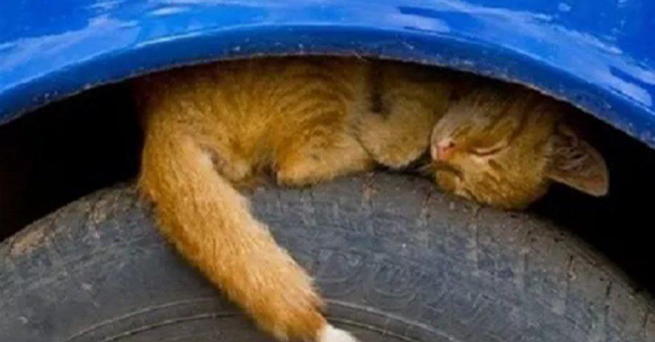 Кошка на колесе машины