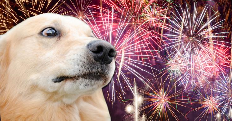 Собака боится новогодних фейерверков
