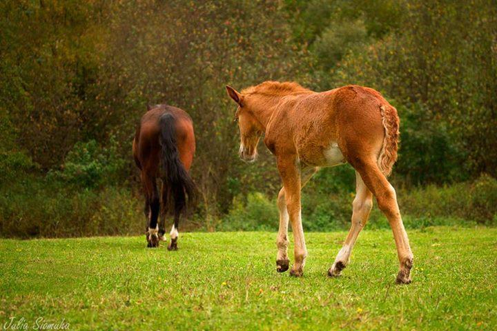 Конь и жеребенок