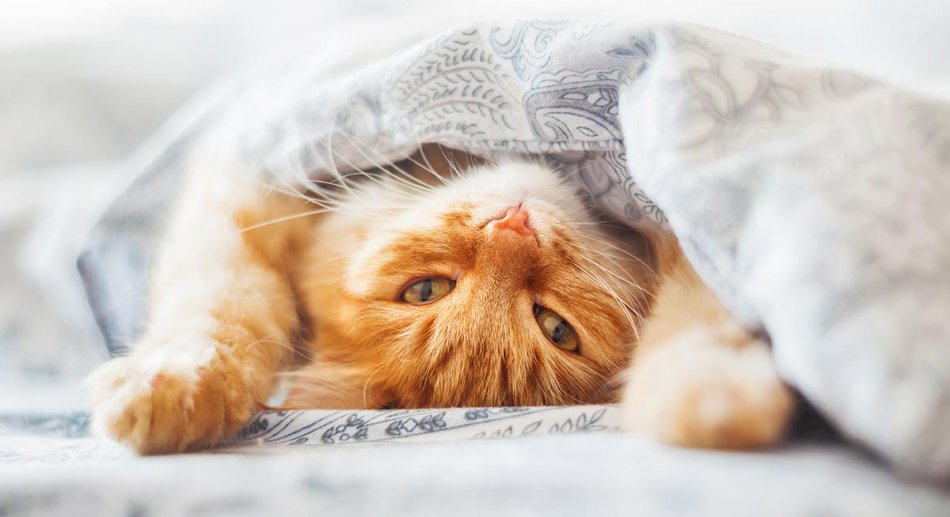 Кошка писает на кровать