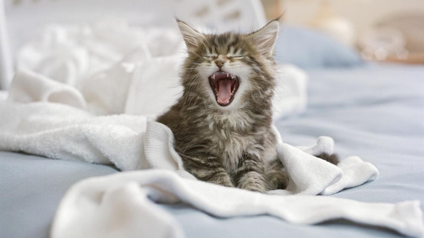 Почему кошка писает на кровать