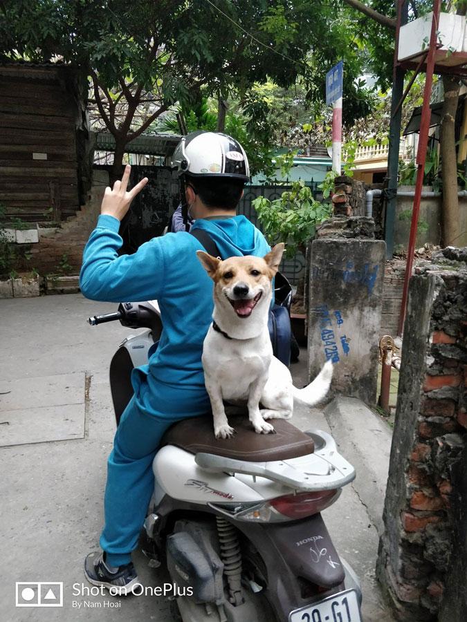 собака-улыбака сидит на мопеде