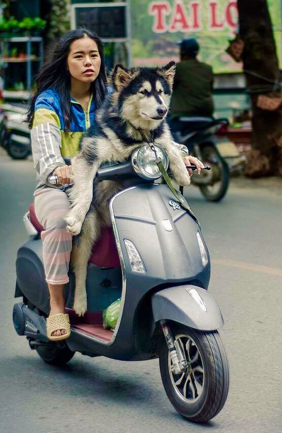 девушка с собакой едет на мопеде