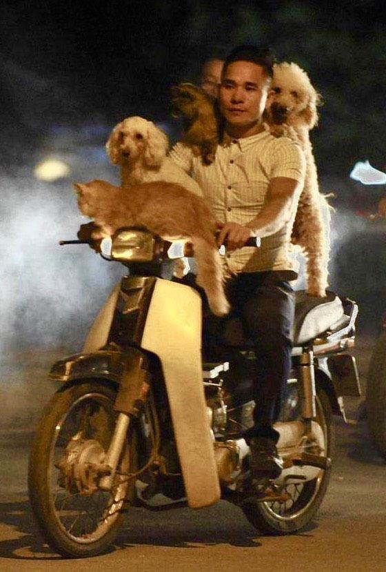 водитель мопеда с кошками и собаками на голове и шее