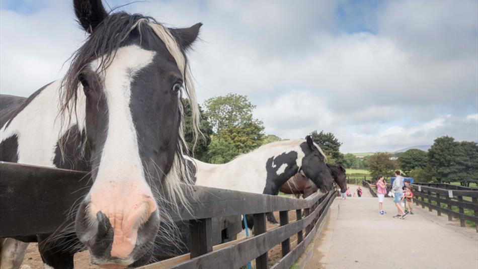 Приют для лошадей-пенсионеров на острове Мэн