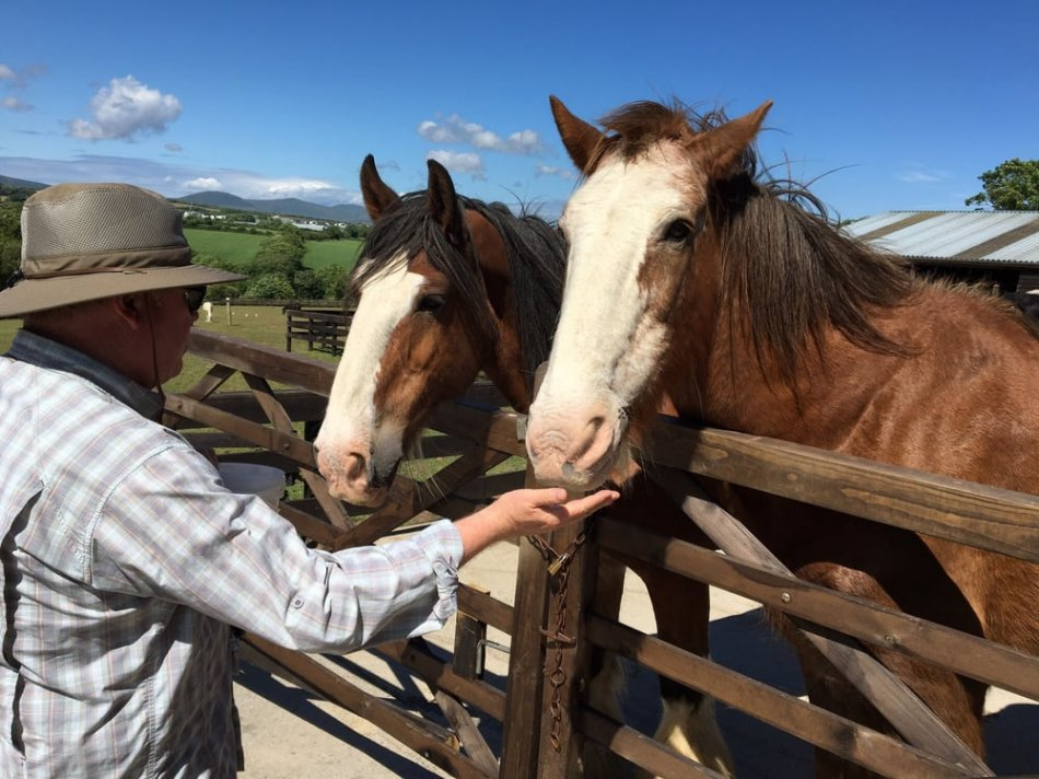 Приют для лошадей-пенсионеров