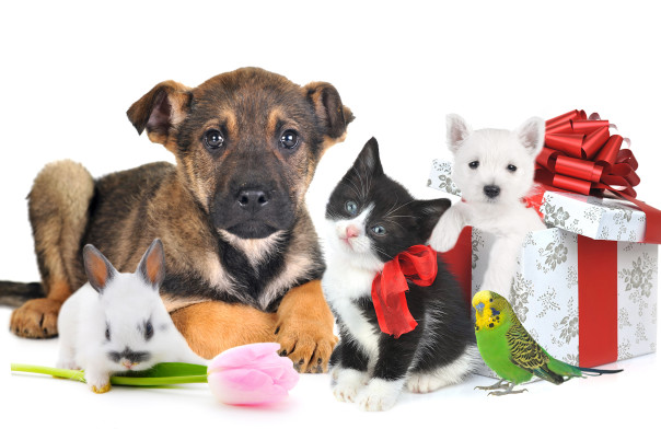 Животные - подарки