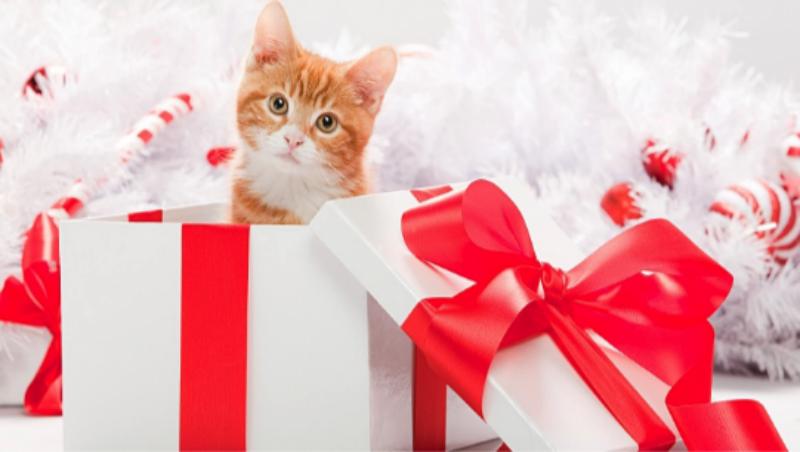 Котенок - подарок