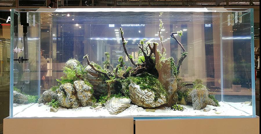 нестандартные приемы посадки аквариумных растений