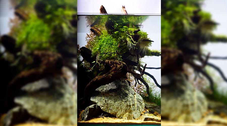 растения и визуальная перспектива