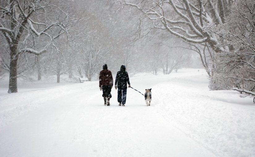 Как ухаживать за лапами собаки зимой