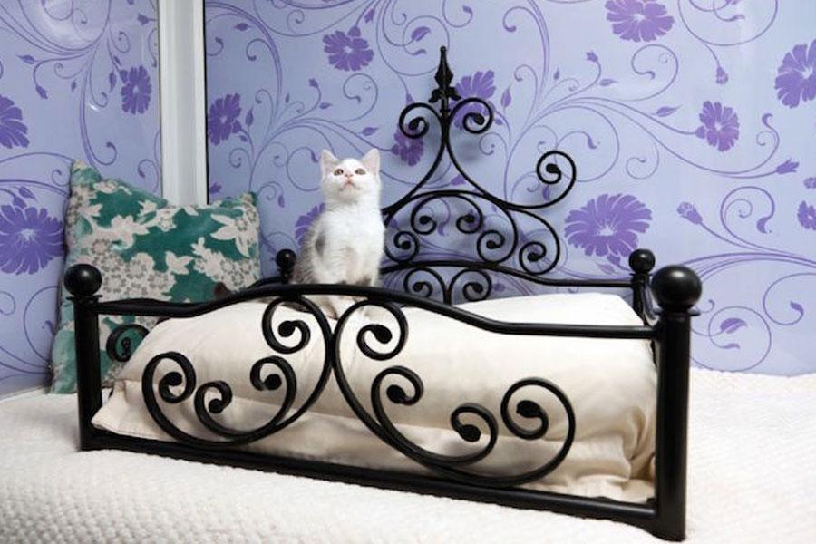 кошка на кровати в отеле