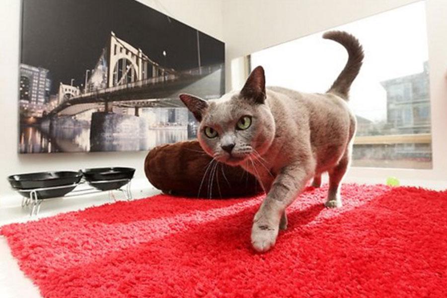 отель для кошек сидней
