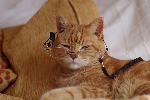 Старые кошки особенности содержания и ухода Болезни старичков
