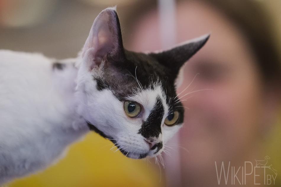 Финальная выставка-шоу кошек