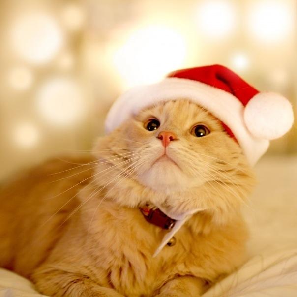 Новогодний Сезон в Музее Кота