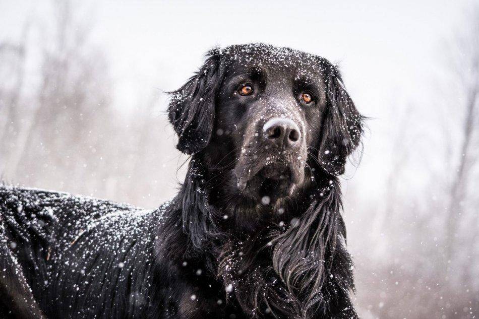 Переохлаждение у собак