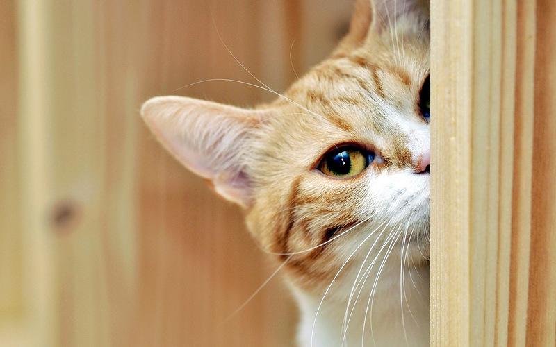 Почему кота пускают первым в дом