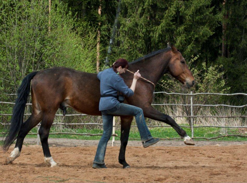 Занятия с лошадью
