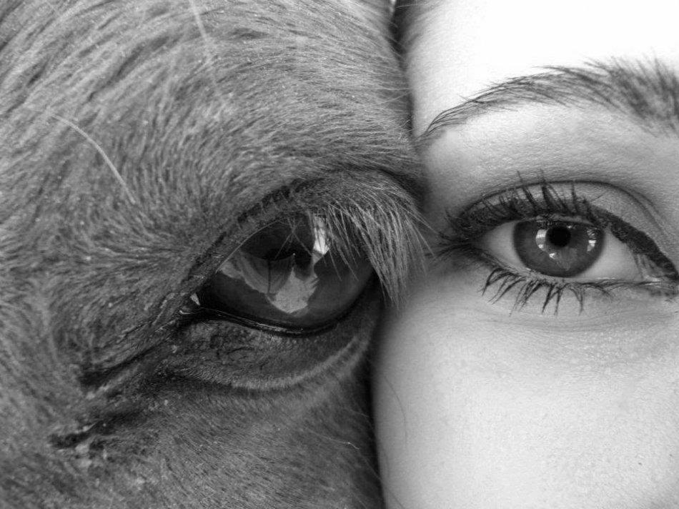 Глаза лошади и человека