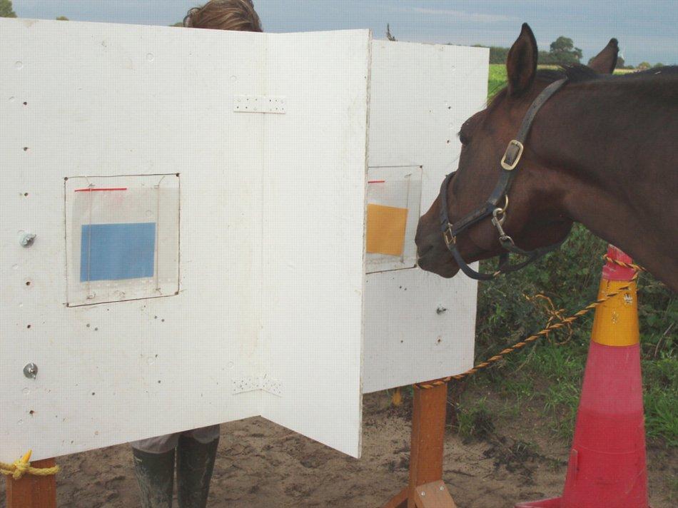 Какие цвета видят лошади