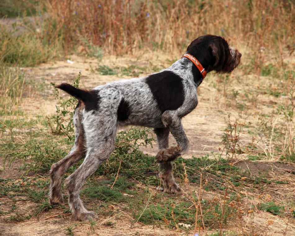 драдхар,охотничья стойка, охота в полях