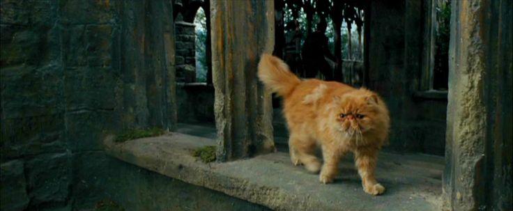 Персидская кошка в фильмах о Гарри Поттере