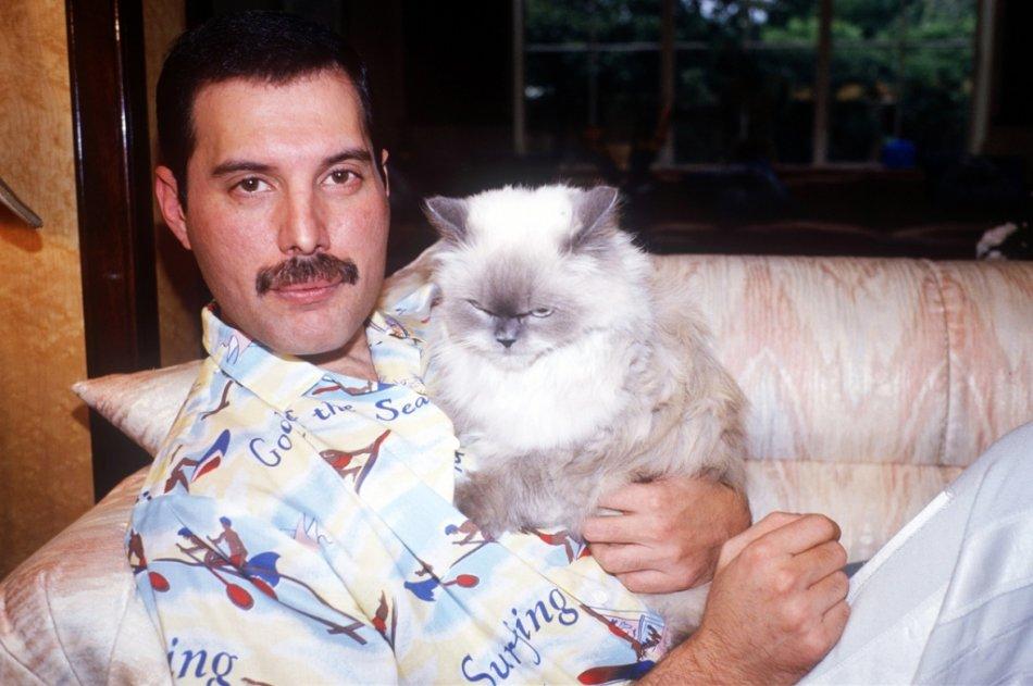 Фредди Меркьюри и персидская кошка