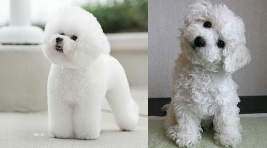 собака до и посте груминга