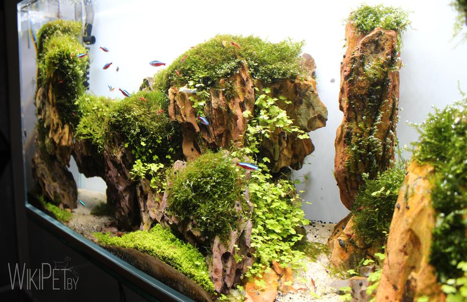 Необычная выставка: аквариумная студия и шоу-рум мебели