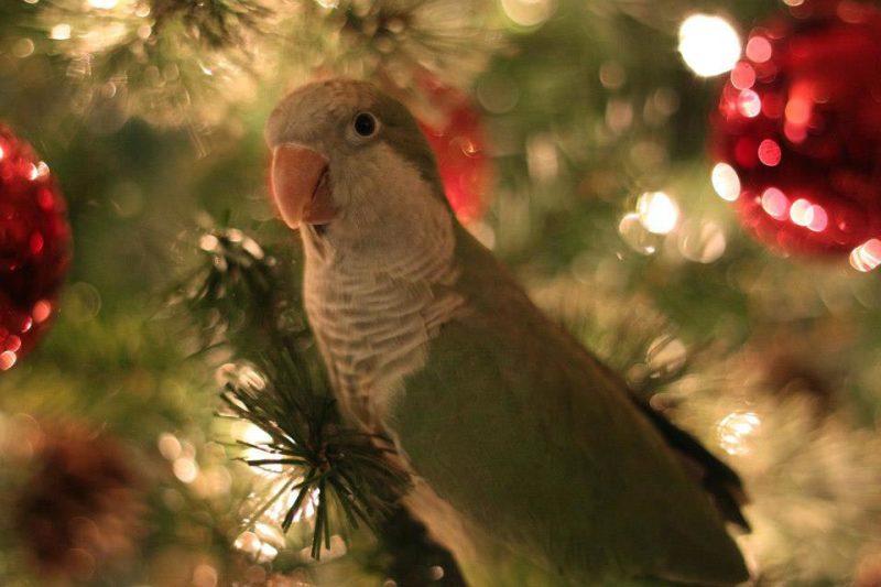 Новогодние опасности для птиц
