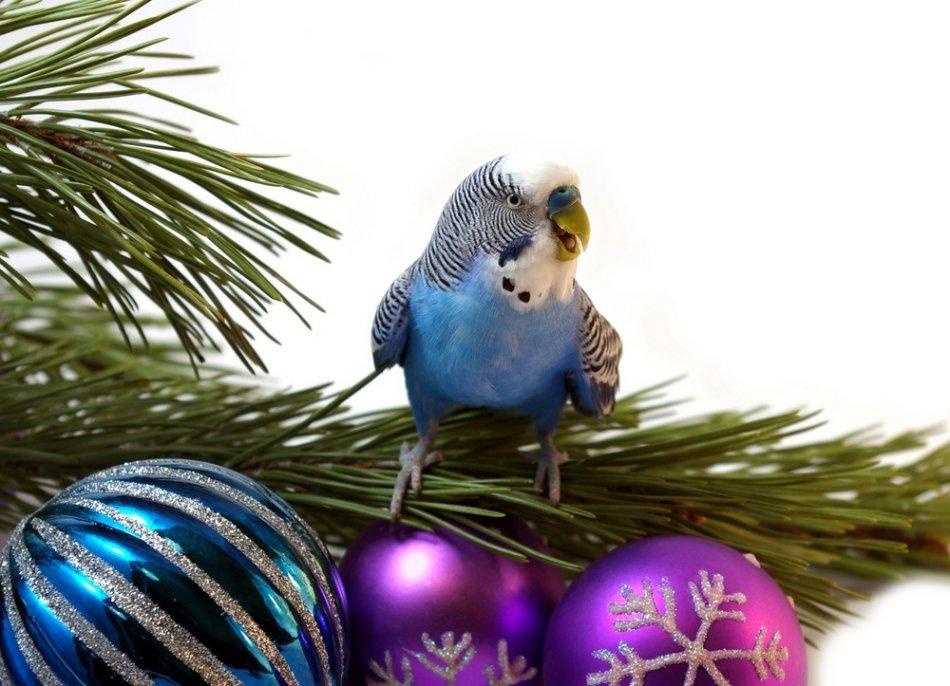 Попугай на новогодней елке