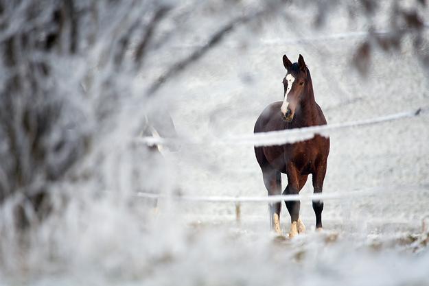 Гадание с лошадьми