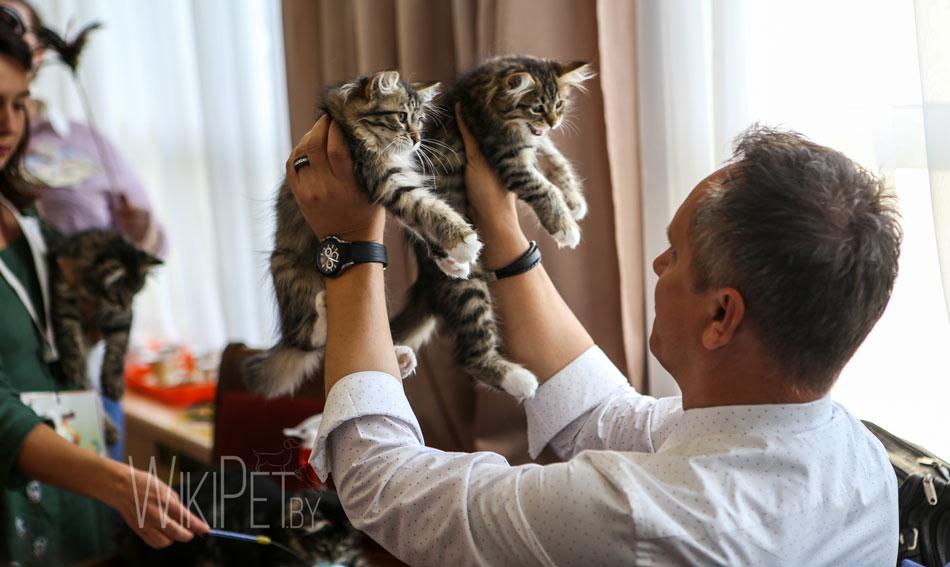 Международная выставка кошек БФЦ